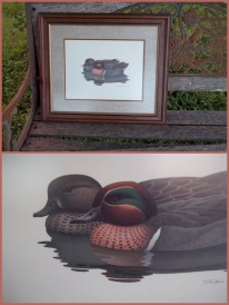 vintage prints, water fowl, three prints