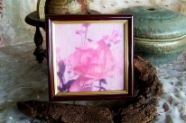 pink rose photo on canvas